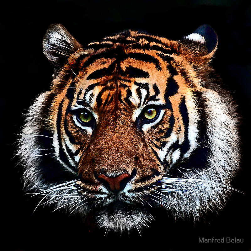 Magnificent Beast by Manfred Belau