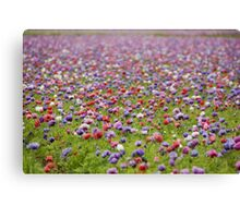 Coloured field Canvas Print