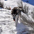 First Snow Day by Ashley  Hernandez