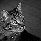 Jasper in Black & White by Jan  Tribe