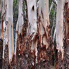 The Australian Gum Tree by Bev Woodman