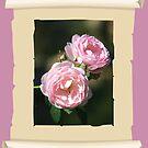 Framed Roses by julie anne  grattan
