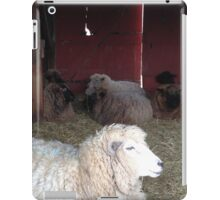 Peaceful Sheep with Red Barn Door iPad Case/Skin