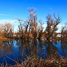 Gray Lodge Wildlife Area II by flyfish70