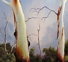Ghostgums by John Cocoris
