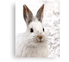 Snowshoe Hare closeup Canvas Print