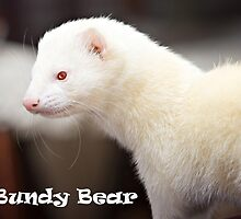 R.I.P. Bundy Bear, 30-01-10 by TubularBelle