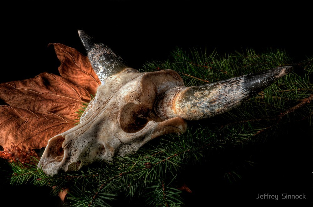 Southwest Cow Skull in HDR by Jeffrey  Sinnock