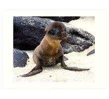 Seal Pup (Galapagos) Art Print
