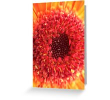 Red & Yellow Gerbera Greeting Card