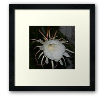 White Queen of the Night Framed Print