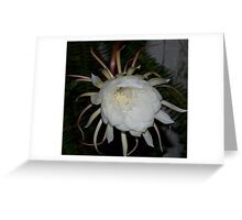 White Queen of the Night Greeting Card