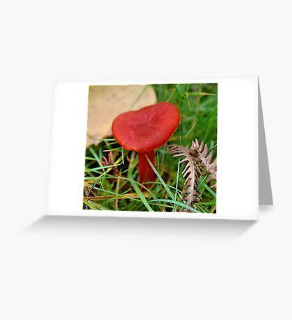 Scarlet wax cap Greeting Card