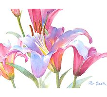 Watercolor Lily Close-up Photographic Print