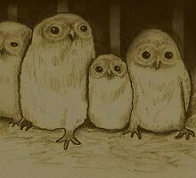 Owlets by Sophie Corrigan