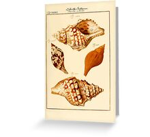Neues systematisches Conchylien-Cabinet - 240 Greeting Card