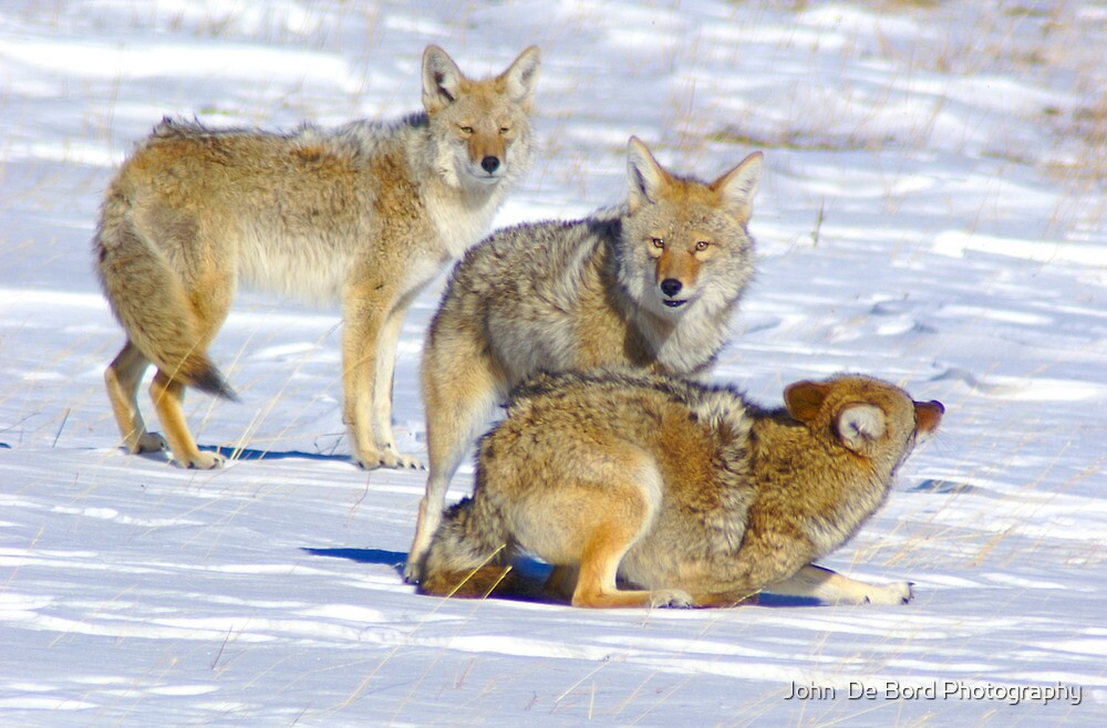 The Playful Pack by John  De Bord Photography