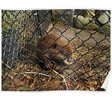 Beaver Boy Poster