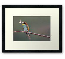 European Bee Eater Framed Print
