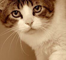 Feline Finesse by Susan Bergstrom