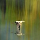 Heron fly by..... by DaveHrusecky