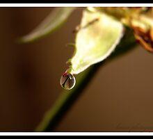 pearl of nature.... by Karan  Vir Singh
