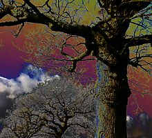 Acid Trees by Andy Mays