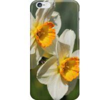 Poet's Daffodils iPhone Case/Skin