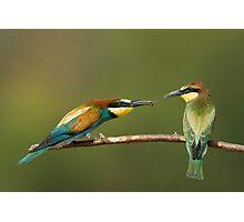 European Bee Eater Photographic Print