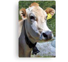 Look At Me I Am A Pretty Cow Canvas Print