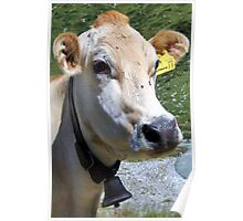 Look At Me I Am A Pretty Cow Poster