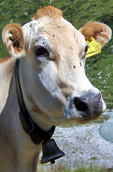 Look At Me I Am A Pretty Cow by Monica Engeler