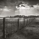 Fenceline in B&W by Steve Silverman