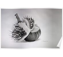 Birth of a chestnut Poster