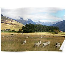 Sheep in the Wilderness Poster