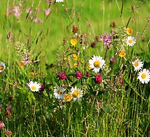 Irish Wildflower Meadow by EUNAN SWEENEY