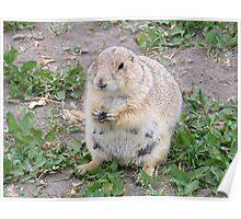 Prairie Dog Prayer Poster
