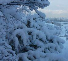 Snowy Trees over looking Reykjavik Sticker