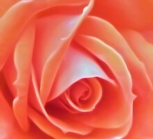 Peach Perfection by Julie Everhart
