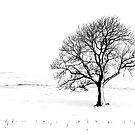 frozen by Dan Shalloe