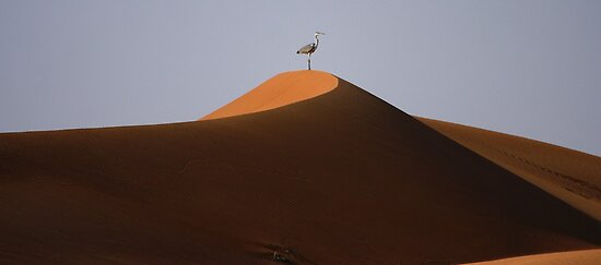 Dune Sunrise with Heron  by David Clark