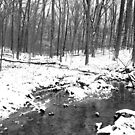 The Winter Flow in the Woods by mwfoster