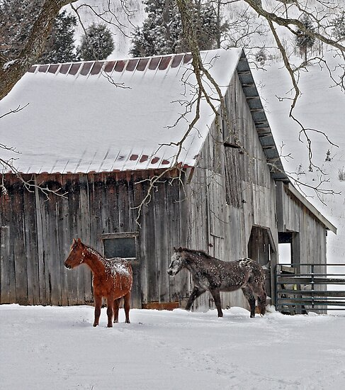Snow Horses by denise romano