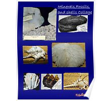 Minerals,Fossils, And Shells Collage Poster