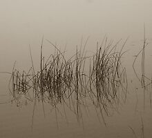 Rippled water among lake reed by Cushman