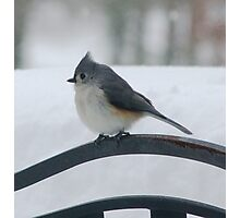 Titmouse in the Winter Storm Photographic Print