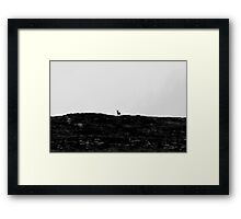 Stag by Lairig Leacach Framed Print