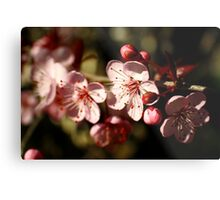 Spring Blossom in Pink Metal Print