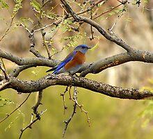 Eastern Blue by Judy Grant