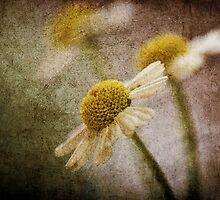 *daisy* by funkymarmalade